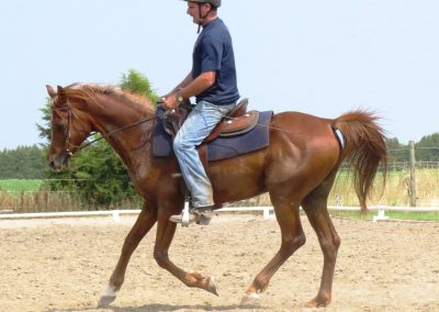 "Arab Gelding  ""The Bronze RF"" aka Fonzi"