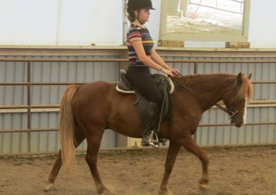 Piper – 7 yr old Welsh Pony
